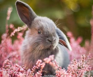 animal, rabbit, and flowers image