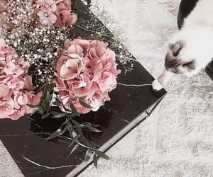animal, cat, and flowers image