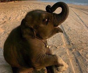 animals and elephant image