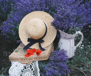 flowers, purple, and garden image