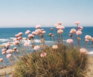 flowers, ocean, and beach image