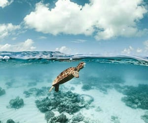 ocean, turtle, and summer image