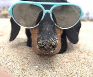 animal, furry, and beach image