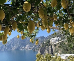 lemon, nature, and summer image