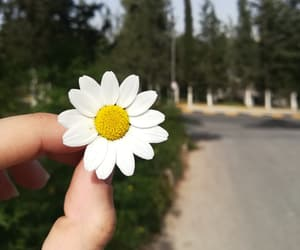 creative, flowers, and happiness image