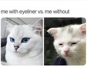 cat, cats, and eyeliner image