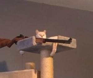 funny, meme, and cat. sniper image