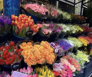 beautiful, colours, and flowers image