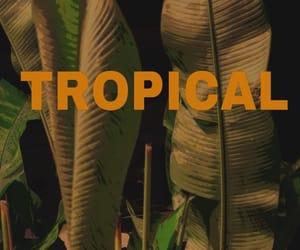 theme, plants, and tropical image