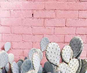 wallpaper, cactus, and pink image