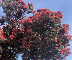 beautiful, red tree, and summer image