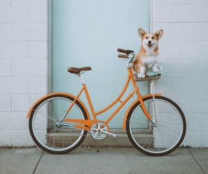 dog, animal, and bicycle image