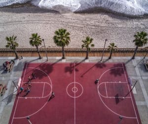 Basketball, palm trees, and summer image