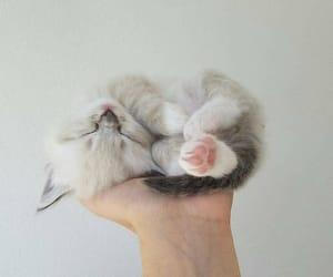 animals, cat, and kitties image