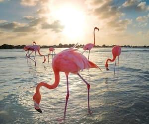 flamingo, beach, and beautiful image