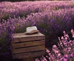 flowers, inspiration, and lavender image