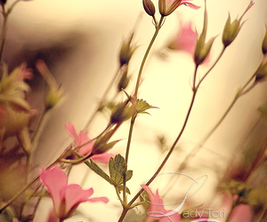 beautifull, flower, and flowers image