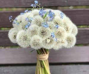 beautiful, dandelion, and beauty image