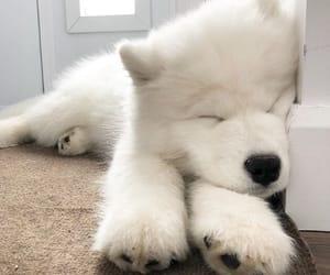 animals, beauty, and dog image