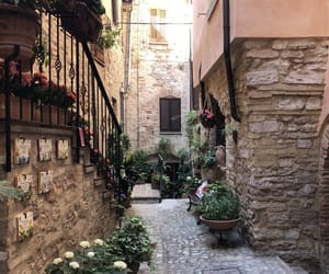 art, flowers, and italy image