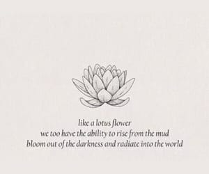 background, flower, and lotus flower image