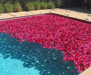 flowers, pool, and rose image