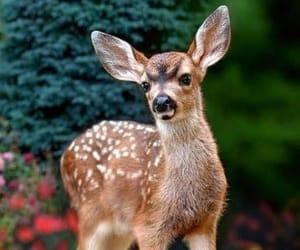 Animales, naturaleza, and cervatillo image