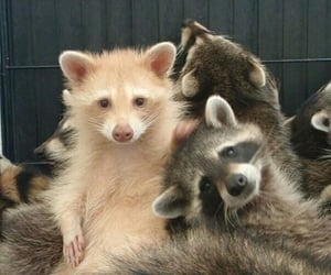 adorable, animals, and cuties image