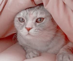 aesthetic, gif, and cat gif image