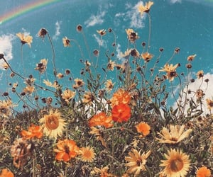 flowers, rainbow, and wallpaper image