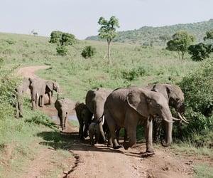 nature, animals, and elephant image