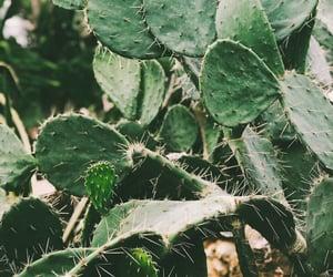 фон, путешествие, and растение image