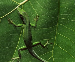 animals, green, and lizards image