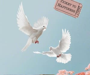 aesthetic, Doves, and soft image