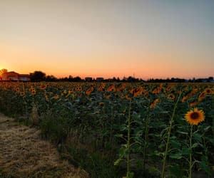 italy, sunflowers, and sunset image