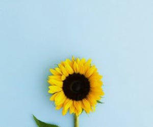 flowers, blue, and sunflower image