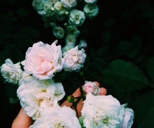 garden, nature, and rose image