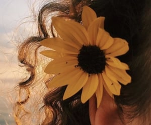 beautiful, girl, and sunflower image