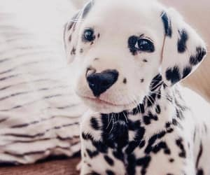 animal, dog, and aesthetic image