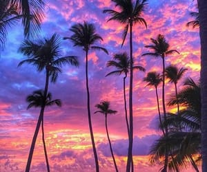 beach, landscape, and palm trees image