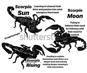 astrology, scorpio, and horoscopes image