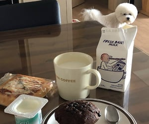 aesthetic, cafe, and dog image