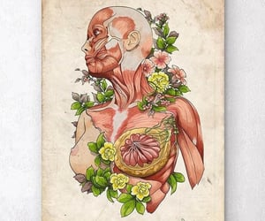 anatomy, blood, and flower image