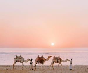 travel, camel, and egypt image