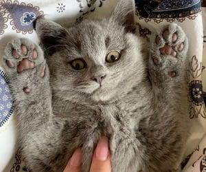 adorable, aesthetic, and animal image