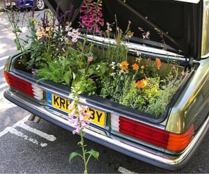 flowers, car, and plants image