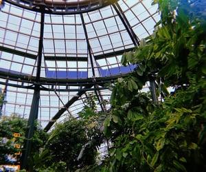 botanical, garden, and green image