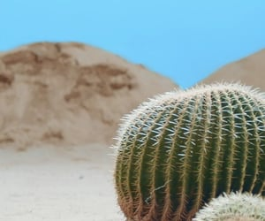 cactus, desert, and fever image