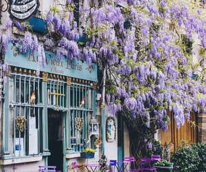 europe, paris, and flowers image