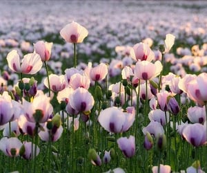 beautiful, nature, and bloom image